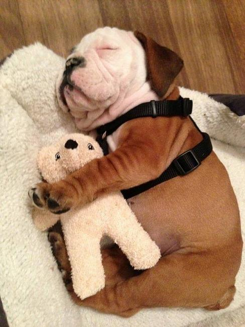 Click image for larger version.  Name:Dog & Teddy.jpg Views:0 Size:68.5 KB ID:46407