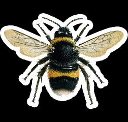 Click image for larger version.  Name:bumblebee_buff-tailed_600.png Views:506 Size:57.5 KB ID:43646