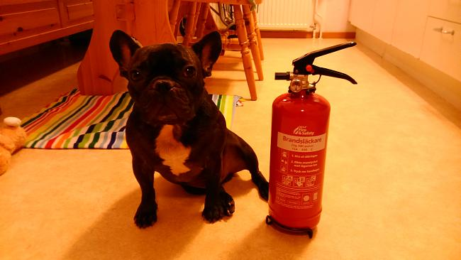 Click image for larger version.  Name:Fonzie Bulldog.jpg Views:12 Size:143.1 KB ID:59794